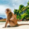 Phi Phi Island Day Tour